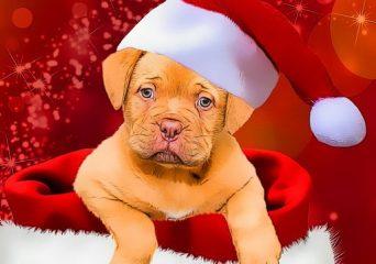 Karácsonyi kutyás kirakó
