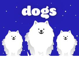 Kövesd a vezér kutyát